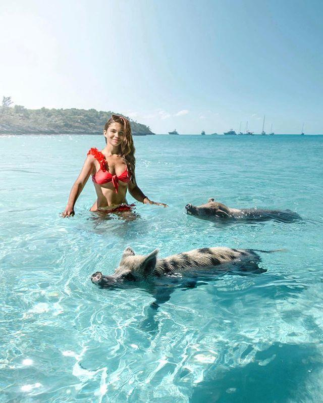Свиньи стали звездами Instagram