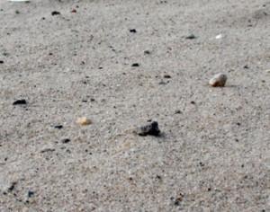 Как убрать песок из бассейна