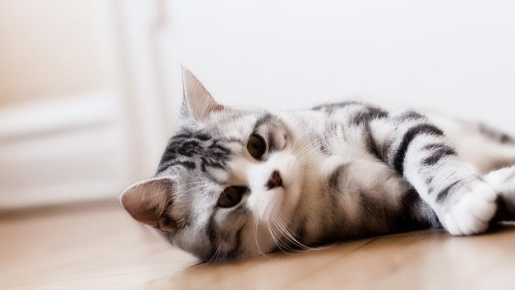 Какую породу кошки выбрать? ТОП-7 самых популярных пород