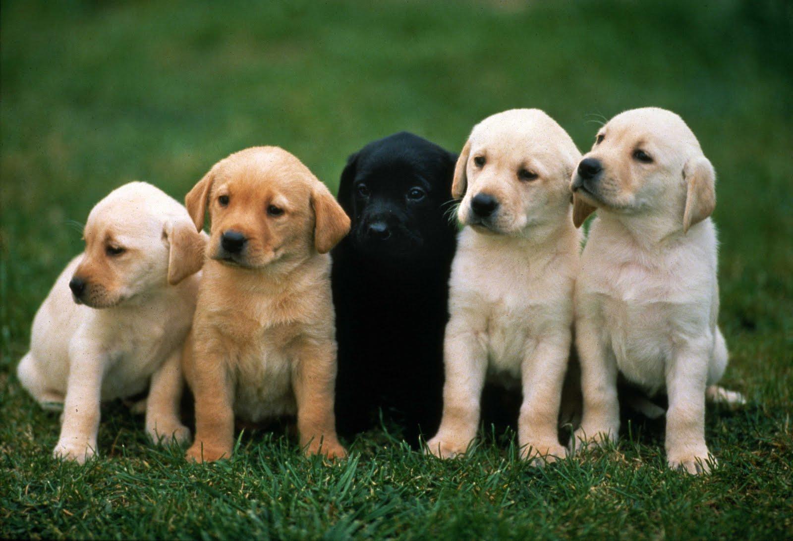 Топ-5 мифов о собаках: что нужно знать перед выбором щенка