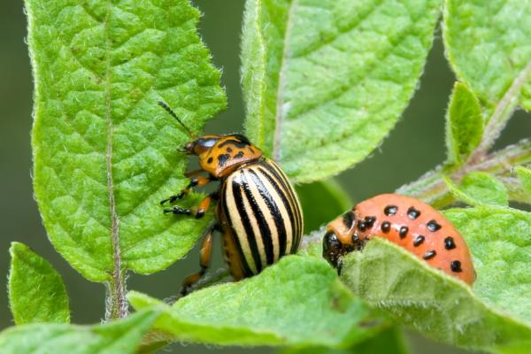Как выиграть битву с надоедливыми насекомыми