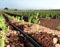 ЗАО «Новый век агротехнологий»: прогрессивные системы капельного орошения
